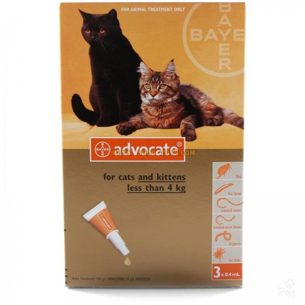 kitten food for senior cat