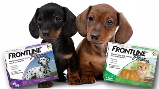 Frontline Plus for dog